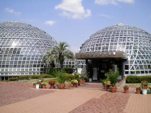 Tropicalfruittreesoftheworld
