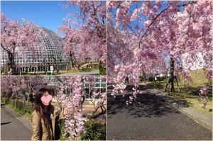Togokusanfruitpark2