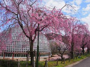 Fruitpark