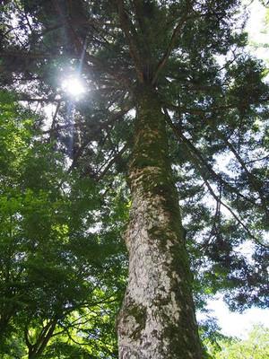 Mominotree