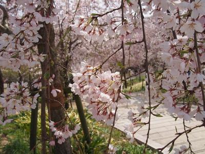 Higashiyamabotanicalgardens