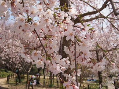Higashiyamabotanicalgardens2