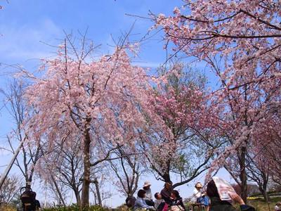 Higashiyamabotanicalgardens3
