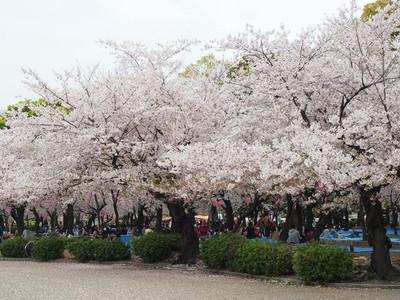 Tsurumapark3