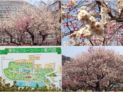 Tougokusanfruitpark