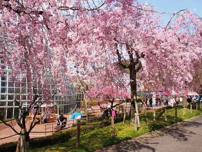 Fruitpark2