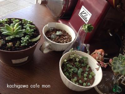 Cafemontaniku