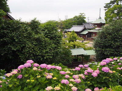 Shokaiji