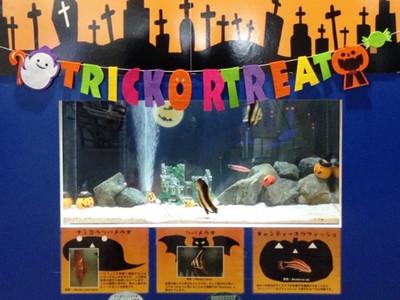 Halloweenaquarium