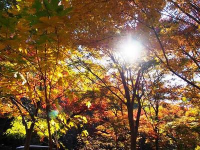 Higashiyamapark5